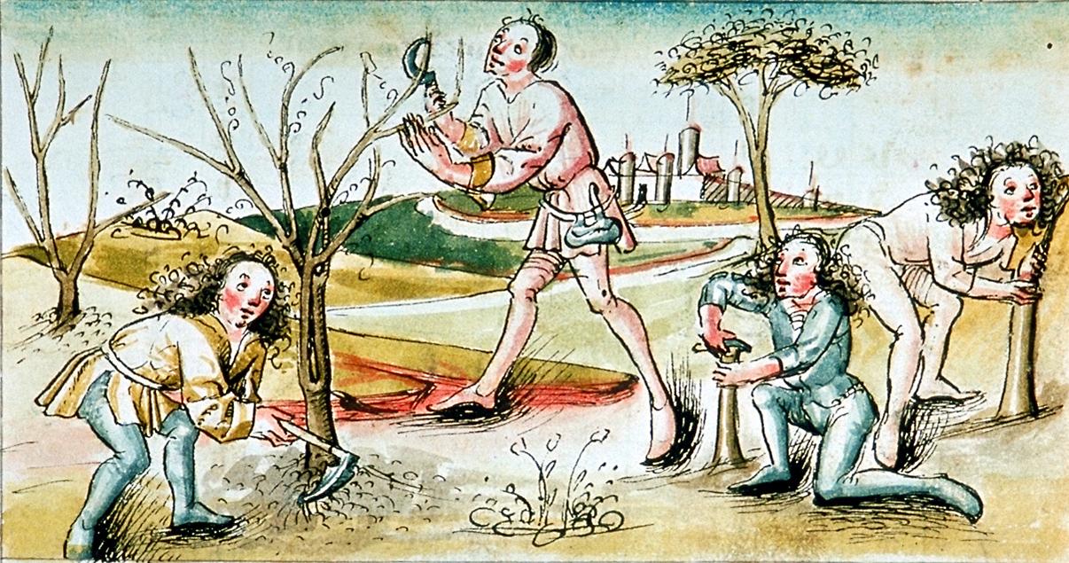 Baumpflege, Holzernte